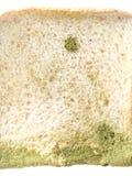 Прессформа на изолированном хлебе стоковая фотография