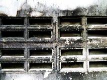 Прессформа на стене Стоковые Фотографии RF