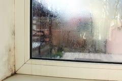 Прессформа около окна в доме Конденсация на окне стоковые изображения