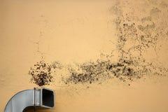Прессформа причин вентиляции Стоковая Фотография RF
