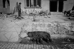 2 престарелое носят ветви на их задних частях с коровами, буйволом и ветчиной идя на улицу Стоковые Фото