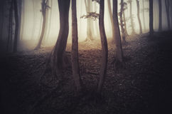 Преследовать лес с загадочным туманом Стоковая Фотография RF