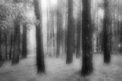 Преследовать лес стоковое изображение