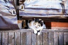 Преследовать кота стоковые фото