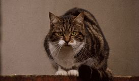 преследовать кота стоковое фото rf