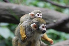 Прелестная обезьяна белки матери и младенца совместно Стоковые Изображения