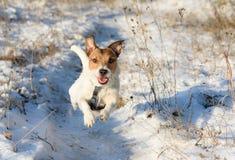 Прелестная собака бежать путем зимы Стоковые Изображения RF