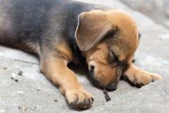 Прелестная собака щенка спать на поле Стоковые Фотографии RF