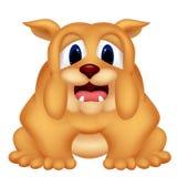 Прелестная собака Bull Стоковые Изображения RF