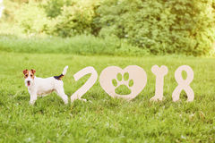 Прелестная счастливая собака терьера лисы на парке greetin 2018 Новых Годов Стоковое Изображение RF