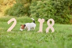 Прелестная счастливая собака терьера лисы на парке greetin 2018 Новых Годов Стоковое Фото