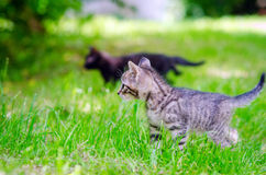 прелестные котята 2 Стоковые Фото