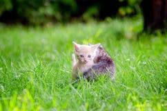 прелестные котята 2 Стоковые Изображения RF