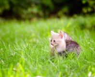 прелестные котята 2 Стоковое Изображение