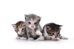 Прелестные Newborn котята на белой предпосылке Стоковые Изображения