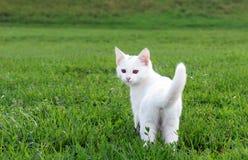 Прелестный белый котенок в траве Стоковая Фотография