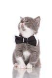 Прелестный котенок в бабочке Стоковое Изображение RF