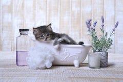 Прелестный котенок в ванне ослабляя Стоковое Изображение RF