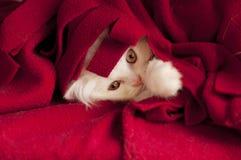 Прелестный котенок Стоковые Изображения