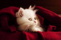 Прелестный котенок Стоковое Фото