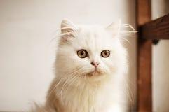 Прелестный котенок Стоковые Фото