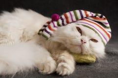 Прелестный котенок Стоковые Изображения RF