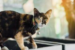 прелестный котенок Стоковое Изображение