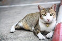 Прелестный класть кота Стоковая Фотография RF