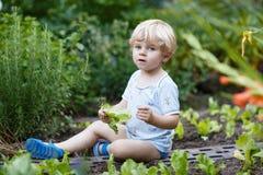 Прелестный маленький белокурый салат рудоразборки мальчика в саде. Стоковая Фотография RF