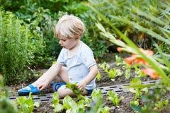 Прелестный маленький белокурый салат рудоразборки мальчика в саде. Стоковое фото RF
