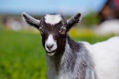 прелестный портрет ребенк козы Стоковая Фотография
