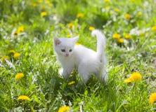Прелестный серый котенок Стоковые Изображения