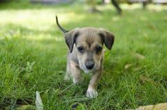 Прелестный смешанный щенок породы Стоковое Изображение