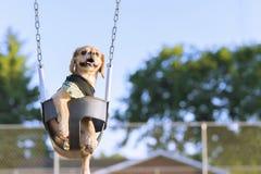 Прелестный, счастливый щенок на качании спортивной площадки в лете Стоковые Фотографии RF