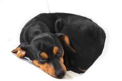 Прелестный щенок на белой предпосылке Стоковые Изображения RF