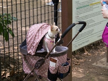 Прелестный щенок одеванный на день вне 2 Стоковая Фотография RF