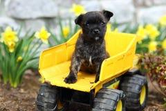 Прелестный щенок сидя на тележке игрушки Стоковое Изображение RF