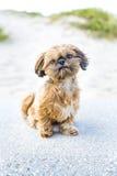 прелестный щенок стоковое изображение