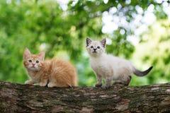 2 прелестных котят представляя на дереве Стоковое Фото