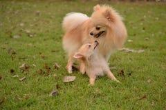 2 прелестных марионетки играют совместно в лужайке Стоковые Фотографии RF