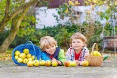 2 прелестных маленьких двойных дет выбирая яблока Стоковое Фото