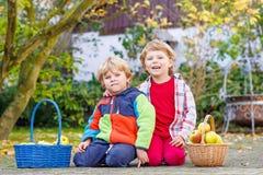 2 прелестных маленьких двойных дет выбирая яблока Стоковые Изображения RF