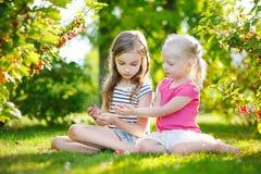 2 прелестных маленьких сестры выбирая красные смородины в саде Стоковые Изображения RF