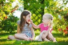 2 прелестных маленьких сестры выбирая красные смородины в саде Стоковое Изображение