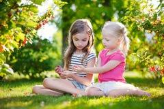 2 прелестных маленьких сестры выбирая красные смородины Стоковые Изображения RF