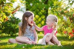 2 прелестных маленьких сестры выбирая красные смородины Стоковое Изображение RF