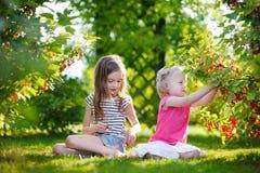 2 прелестных маленьких сестры выбирая красные смородины Стоковое Изображение
