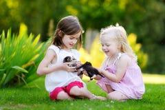 2 прелестных маленьких сестры играя с малыми newborn котятами Стоковое фото RF