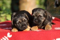 2 прелестных щенят лежа на одеяле Стоковое Фото