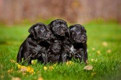 3 прелестных щенят Стоковые Фотографии RF